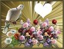 fleurs et pigeon