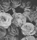 Fleur Tumblr