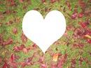 corazon de naturaleza