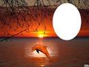 dauphin couché de soleil
