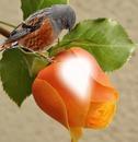 Avecilla posado en una rosa