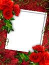 Cc rosas rojas