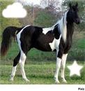 !! Paint Horse !!