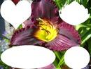 cadre des fleurs lys photos