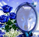 Loup roses bleues