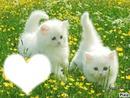 cat blanch
