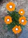 collage de flores