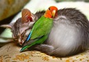 bonne sieste