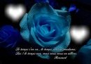 Rose bleue et citation de Ronsard