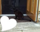 Katze coco