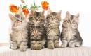 4 chatons 1 photo