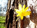 Fleur dans l'arbre