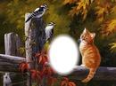 chat et oiseaux