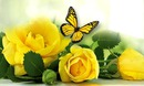 Roses jaune et papillon
