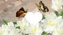 fleur blanc