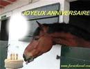joyeux anniversaire chevaux