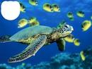je nage avec les tortues