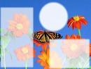 papillon 3 photos