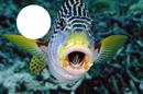 1 foto peixe mar