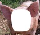 le nouveaux cochon
