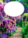 Nature-sentier-fleurs-jardin