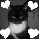 l amour d un chat