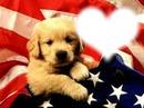 chiot et drapeau de U.S