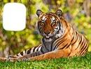 Tiger 88
