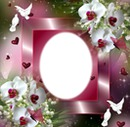 cadre orchidées