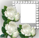 3 roses blanches laly
