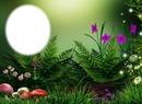 Fleurs et champignons