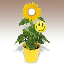 Sunflower and Smiley