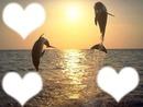 coucher de soleil avec des dauphin