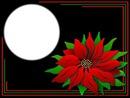 Fleur de Noel