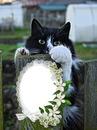 Cc Mi gato