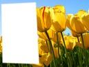 tête dans les tulipe