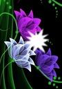 Cc flores pintadas