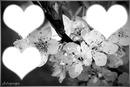 fleur noir & blanc
