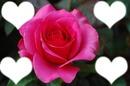 amitier rose pour 4