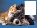 animaux - amitié
