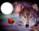 волк любовь