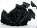 l'amoure noir