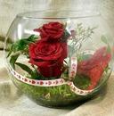 renewilly rosa en esfera