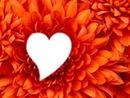la fleur d'amour