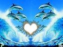 dauphin avec soleil coeur