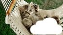 Cétina chat
