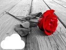 rosa roja con fondo oscuro