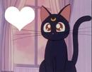 Luna da Sailor Moon Cat