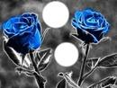 2 roses bleue