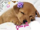 chien qui dit je t'aime